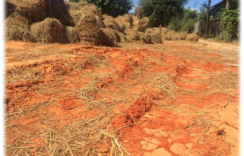 Bauern kämpfen mit Trockenheit