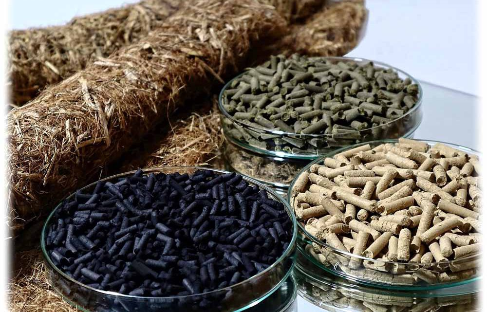 Sachsen und Vietnam testen Reismatten gegen Umweltzerstörung
